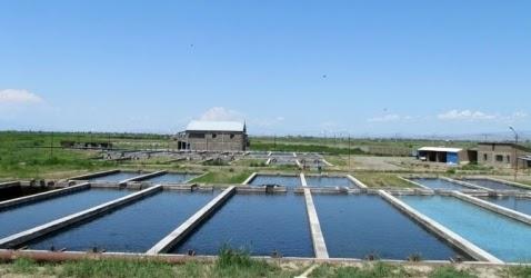 De 234 solo 8 piscifactor as usan reciclado de agua soy for Granja de peces ornamentales