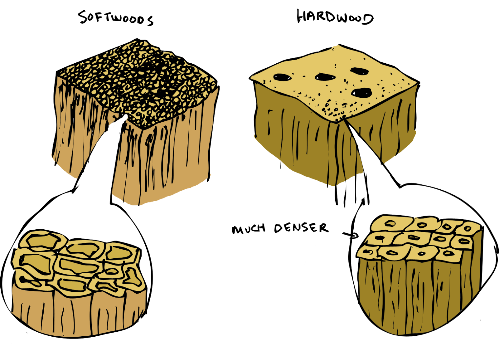 Hardwood Vs Softwood ~ Sketchy science burn baby the of a perfect