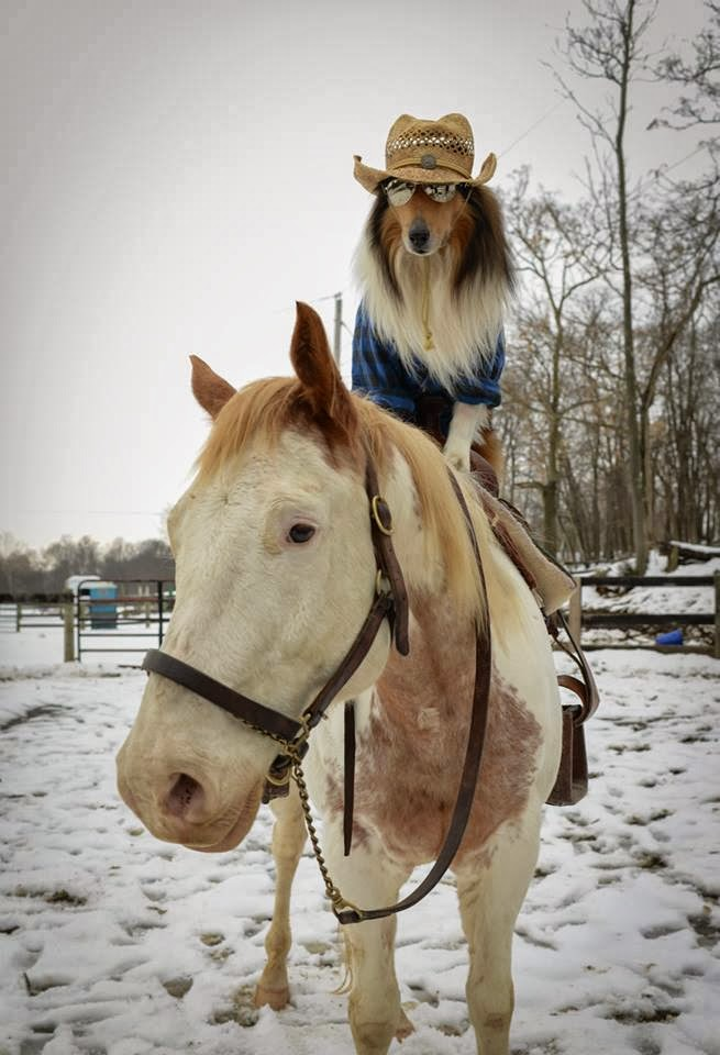 Funny animals of the week - 3 January 2014 (40 pics), cool dog wears hat and sunglasses riding a horse