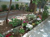 μικρος κηπος (μετα)