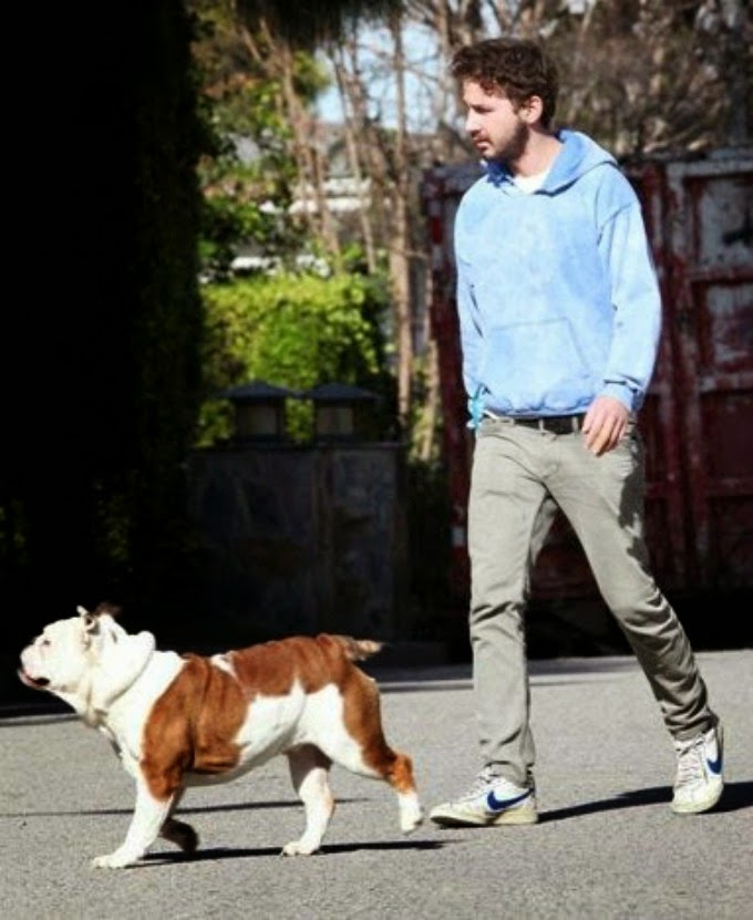 shia labeouf with dog
