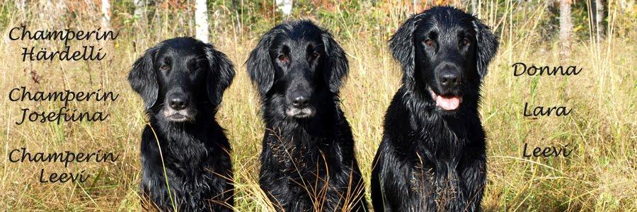 Flatit Donna, Lara ja Leevi