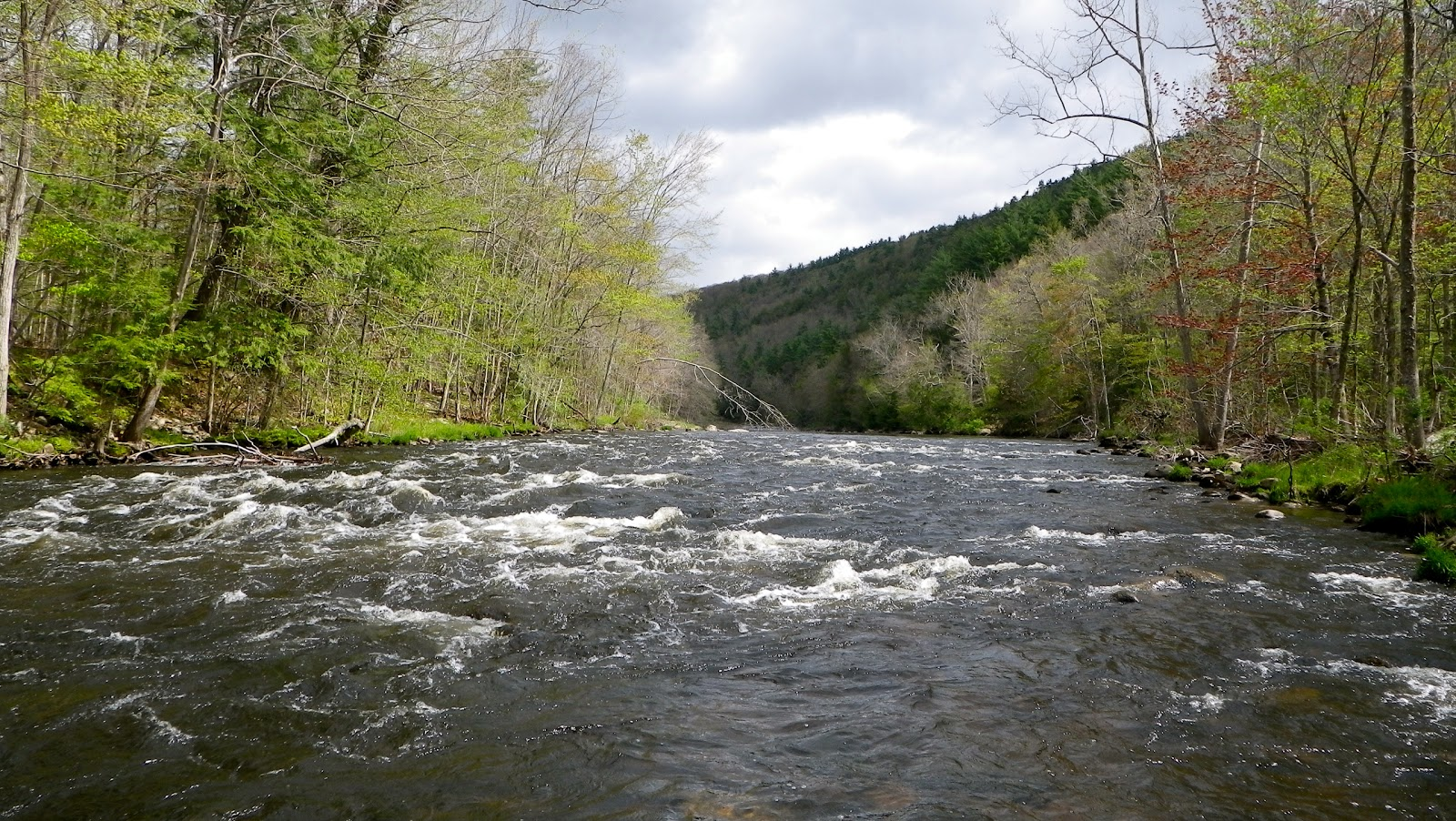 The jersey angler farmington river for Farmington river fishing report