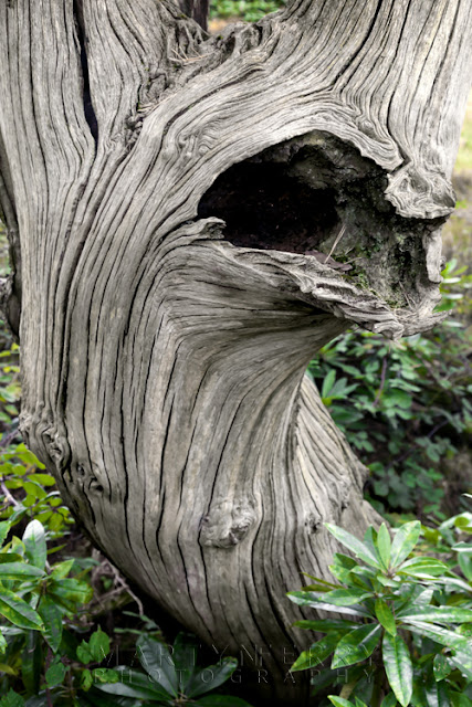 Gnarled tree at Margam Country Park in South Wales by Martyn Ferry Photography