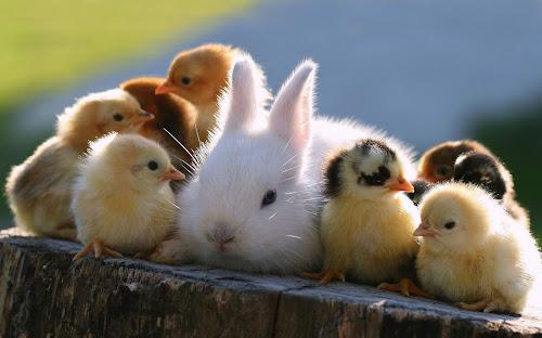 Gambar Kelinci Cantik Lengkap
