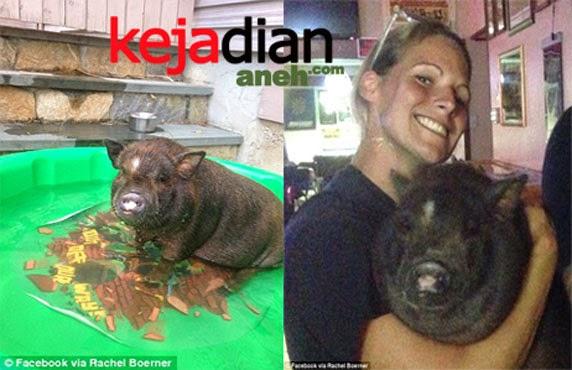 Girl And Pig Flight