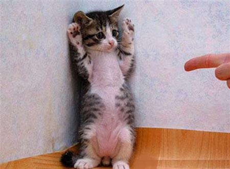 Very-funny-cat