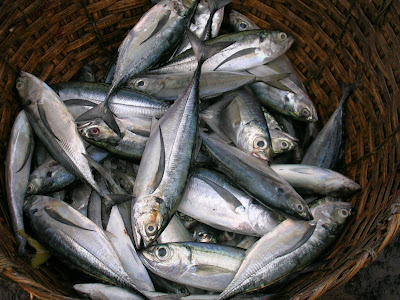 Mackerel and Herring