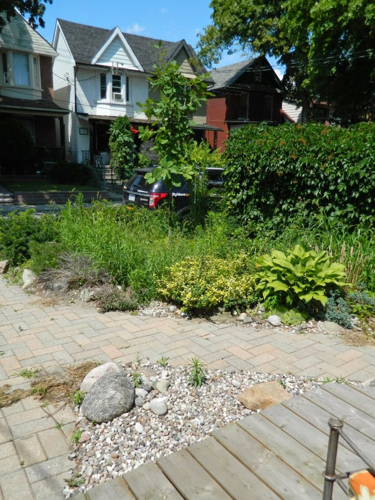 Garden cleanup Leslieville front yard before Paul Jung Gardening Services Toronto