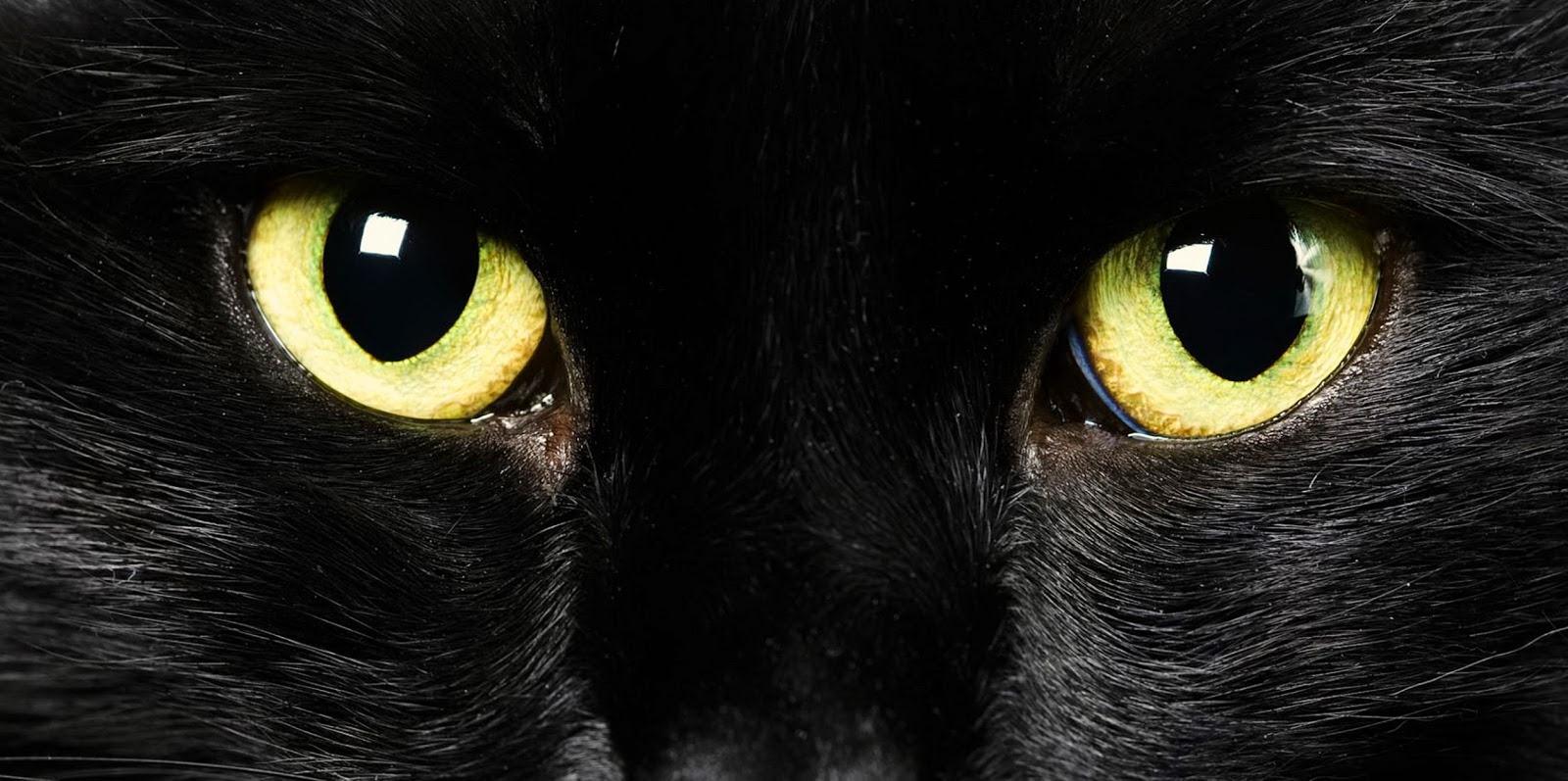 Mitos-Mitos Seram Tentang Kucing Hitam dari Seluruh Dunia ~ One web id