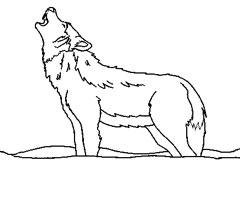 Vaitiare cook le loup - Dessin loup facile ...