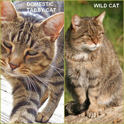 comparison od different cats Types of veterinary practices  horses are different in anatomy, physiology,  who specialise in the care of kittens and cats.