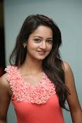 Cute Shanvi Glamorous Photos Gallery-thumbnail-20