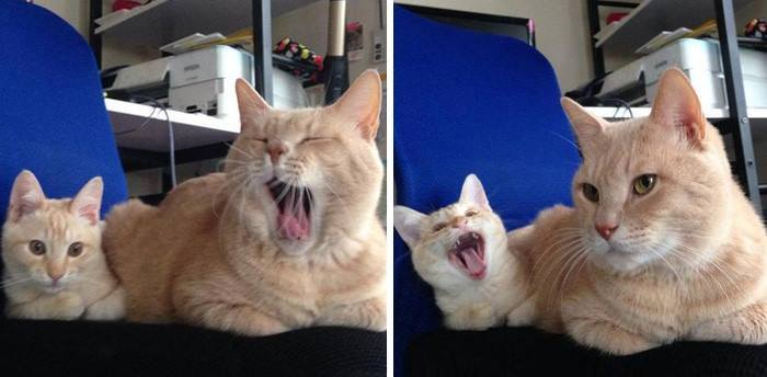 14 Cats With Their Cute Mini-Mes