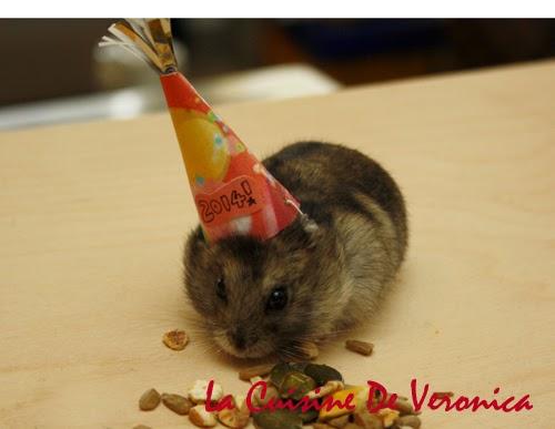 Hamster, 倉鼠, 侏儒鼠, Mr. Buttons, 新年, New Year