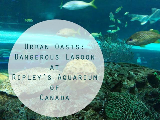 Ripley's Aquarium of Canada Dangerous Lagoon. Fish coral Toronto