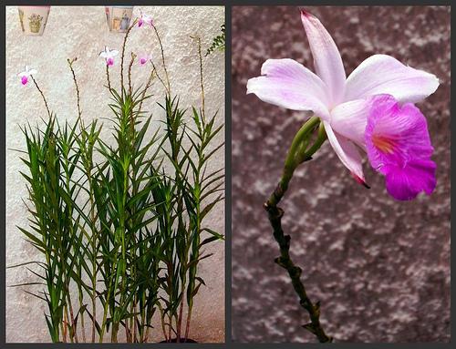 jardim vertical de bambu : jardim vertical de bambu:Para quem tem pouco espaço o jardim vertical é uma boa escolha..