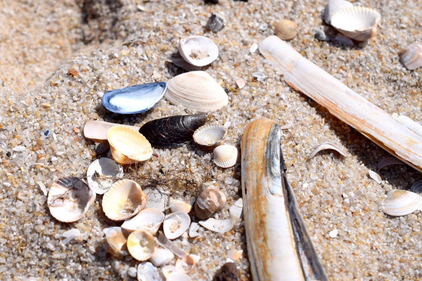 Sommer auf Sylt: Muscheln am Strand