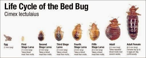 bed bugs treatment advice EPB Pest Control