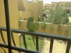 Nieuwsgierige papegaai