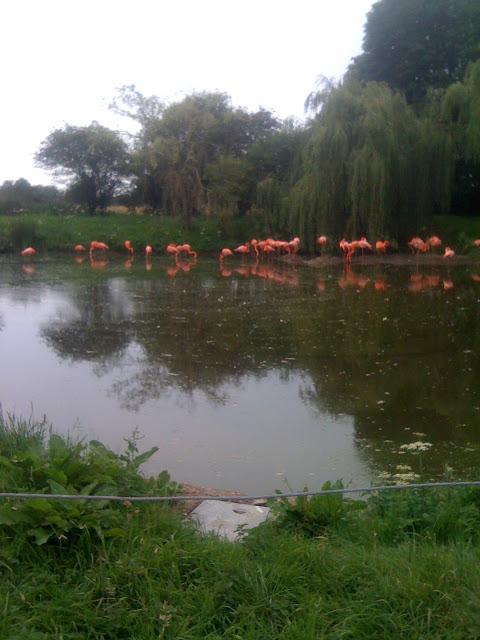 flamingos lake