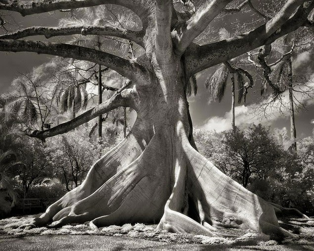 beth moon oldest living trees-2