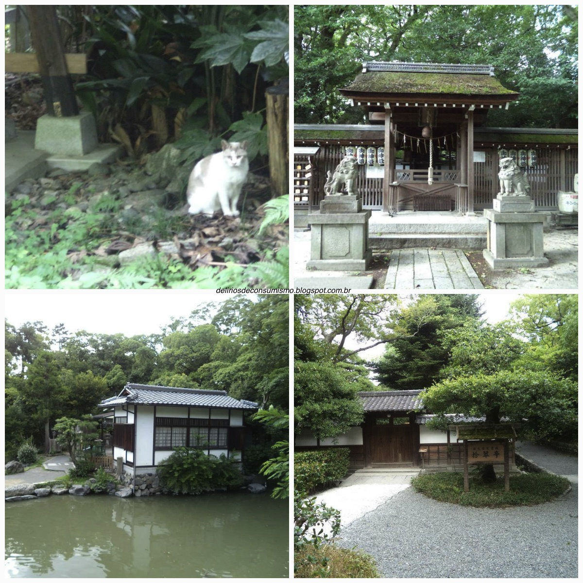 Kyoto, Quioto, Japão, Japão, trip, travel, templo, gato, Castelo, Castle, Nijo, Nijo Castle