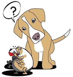 Nuevo tratamiento contra las pulgas de Perro y Gatos