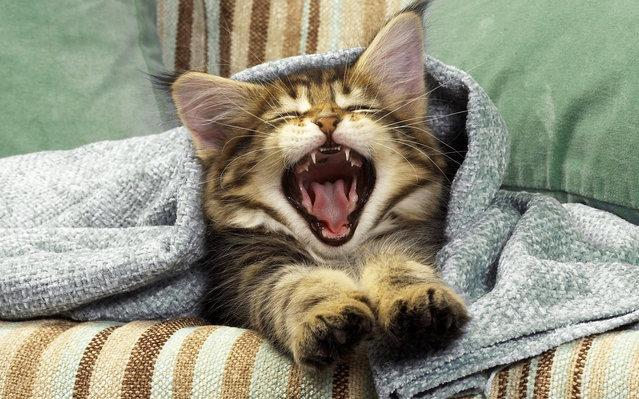 [Image: Cute+Cat+Yawning.jpeg]