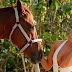 Το κορίτσι (Kimberley Garner).. και το άλογο!