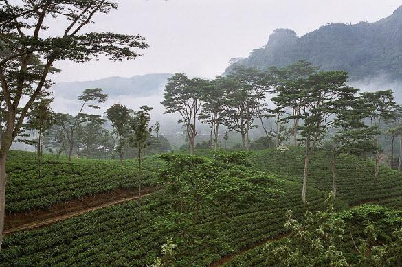 amazing greenery photography from srilanka