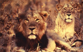 Gir National Park, Gujarat