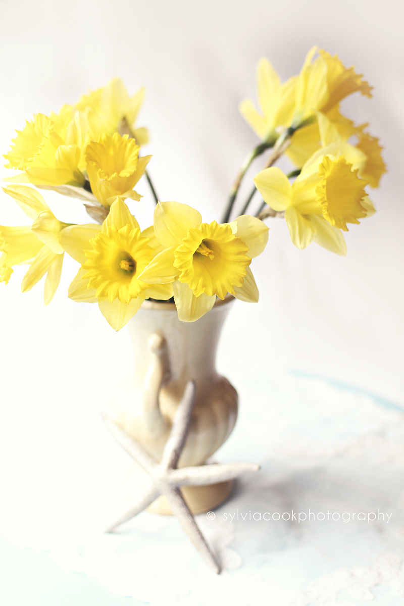 daffodils, spring flowers