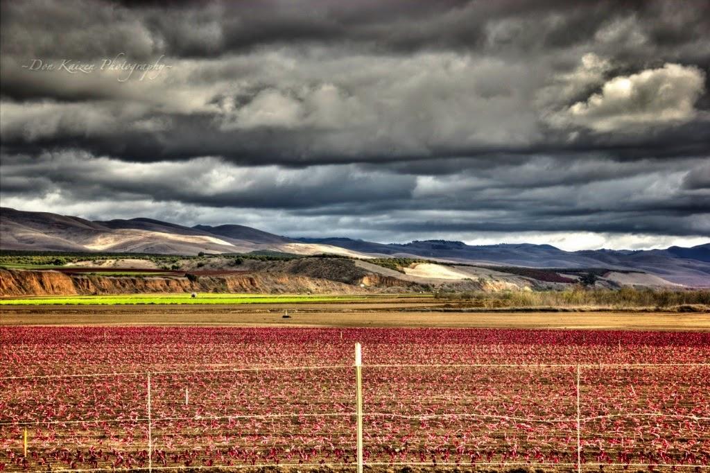 Santa Maria, River bed, HDR, photography, farm, drought, California