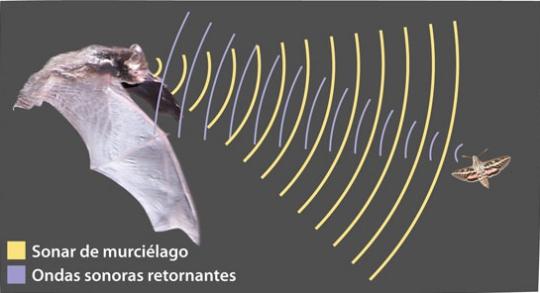 Murcielagos y ultrasonidos en biologia