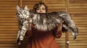 World's Longest Cat Stewie