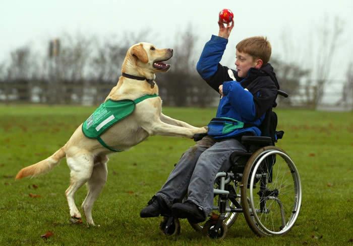 How Do You Qualify For A Service Dog