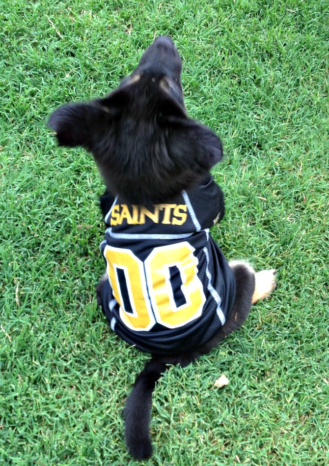 The Holland House: Saints Jersey