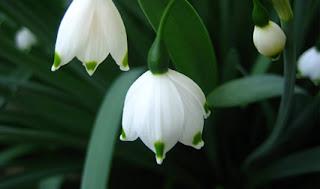 ev çiçekleri