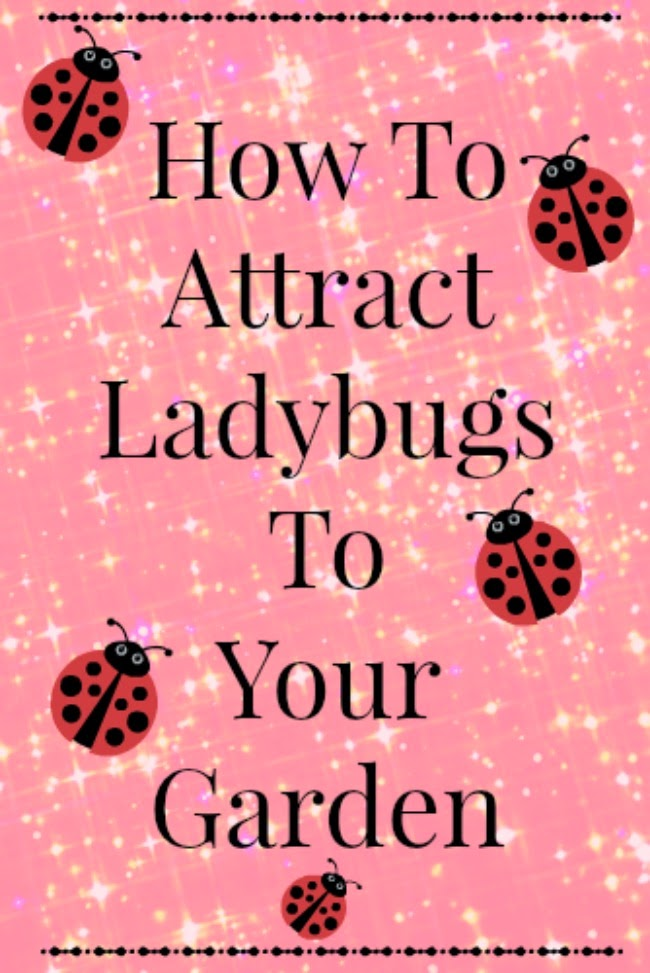 Ways to attract ladybugs to your yard or garden