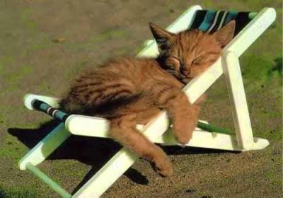 chat qui bronze