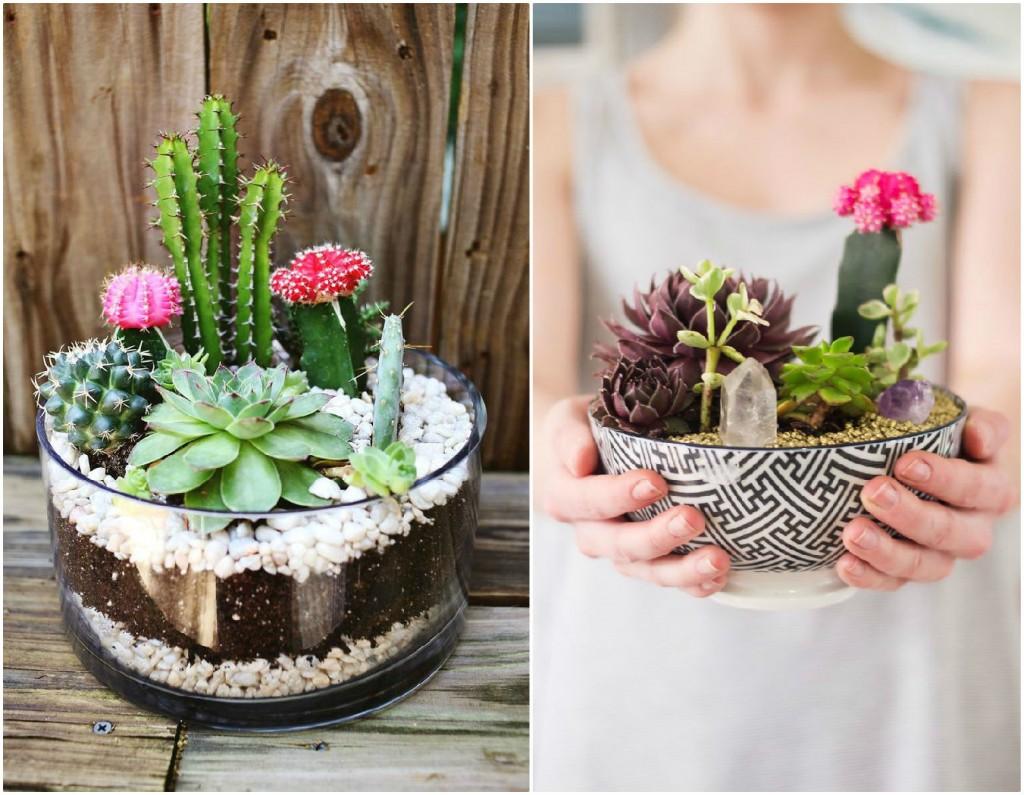 El balcon de ana composicionnes de cactus for Cactus decoracion