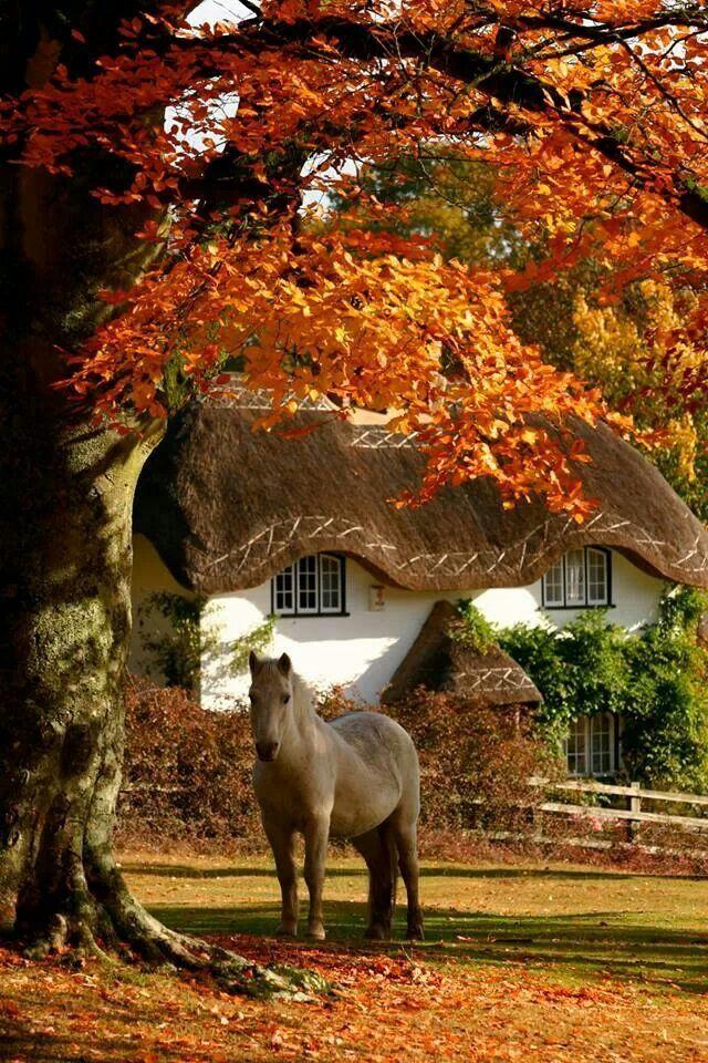 autumn pony
