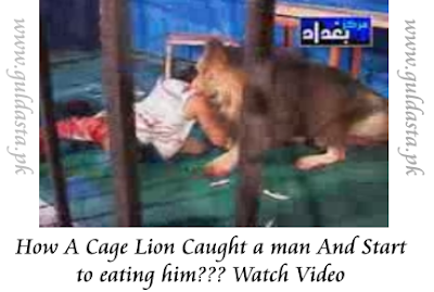 lion eating man in front of family, lion eating man alive, lion eating man dailymotion, lion eating man in zoo, lion eating man in cage, lion eating man in circus, lion eating man 1975, lion eating zebra, woman eaten by lion, lion eats woman, lady eaten by lion