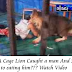A Cage Lion Caught a Man and Start to Eat Him (Watch Video)
