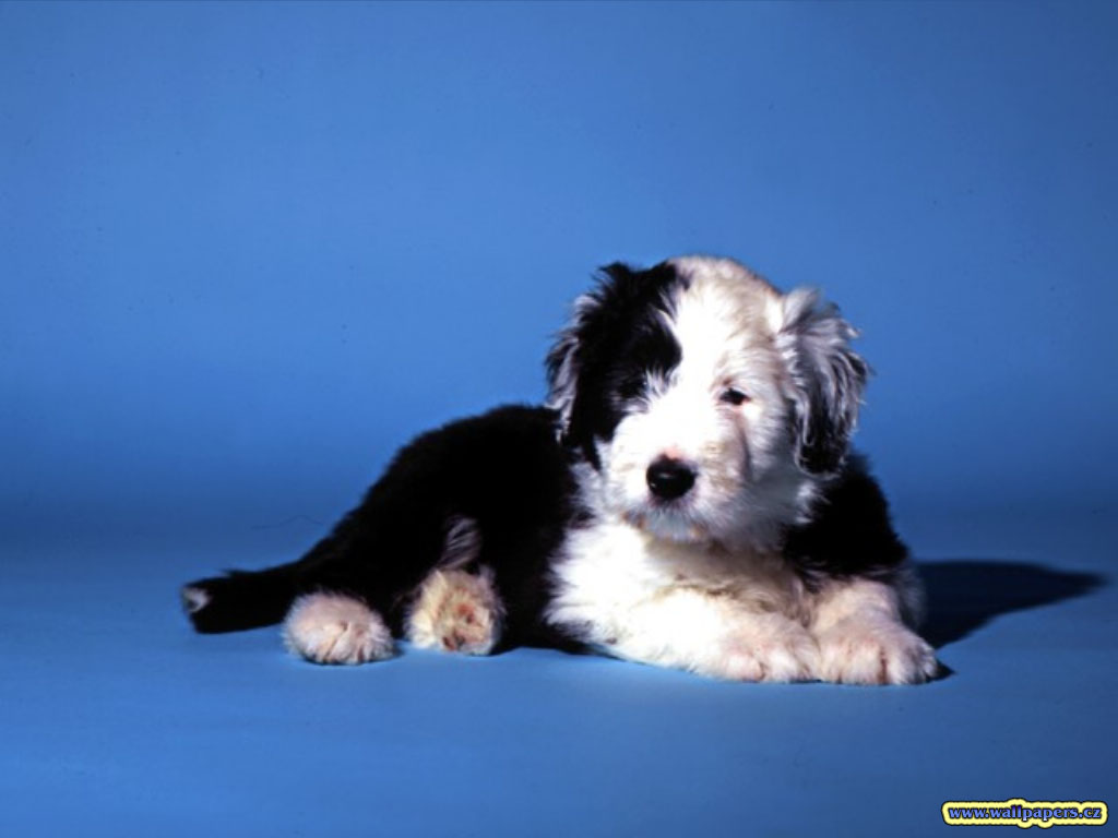 http://1.bp.blogspot.com/-DcUS_c1Qulc/TdsQU_uhHJI/AAAAAAAAASU/VCap5SYglqc/s1600/black-and-white-dog-wallpaper.jpg
