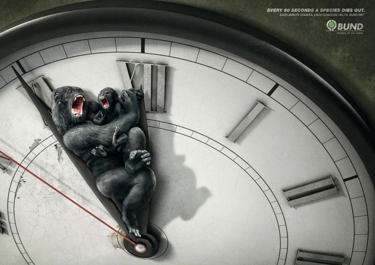 Toutes les 60 secondes une espèce disparaît