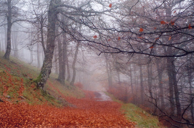 Misty trail in the Pyrenees mountain range in Spain