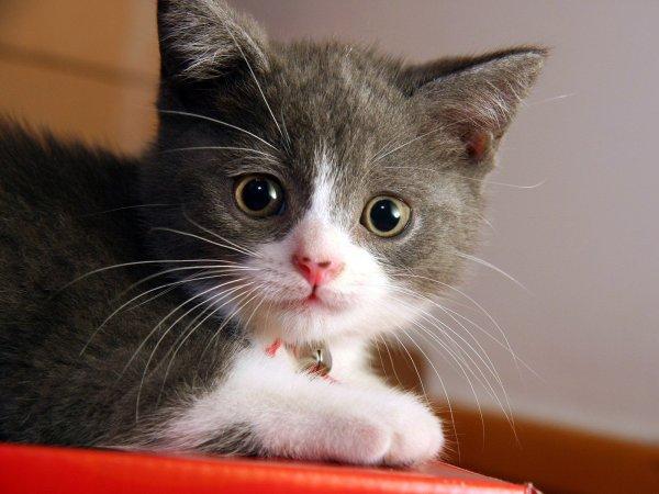 o pisică frumușică