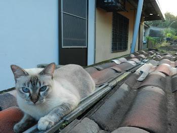 Meow-Meow Mochi